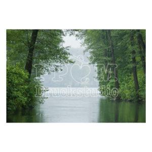 """Foto Poster oder Leinwandbild """"Bäume am Fluss"""""""