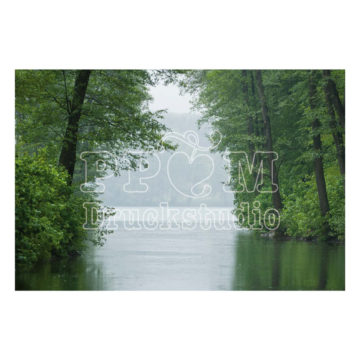 Bäume am Fluss. Leinwandbild oder Poster in verschiedenen Formate. Holen sich ein wenig die Natur in Ihr Haus. Dekorieren Sie neu!
