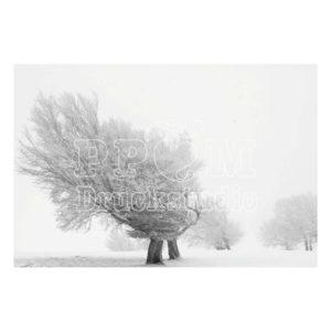 Baum in eisiger kälte in graustufen