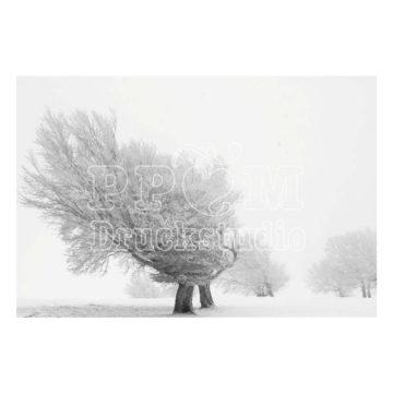 Baum in eisiger kälte in graustufen.
