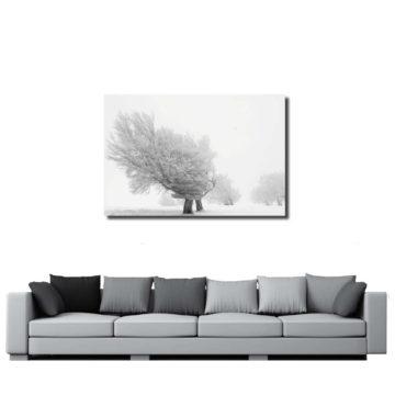 Baum in eisiger Kälte in graustufen in Deinem Zimmer.