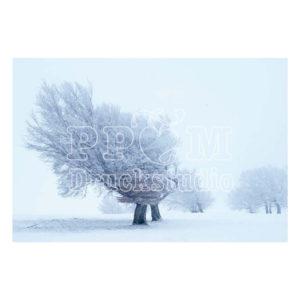 Baum in eisiger kälte