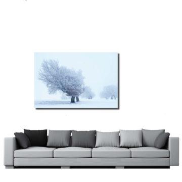 Baum bei Kälte im Wohnzimmer