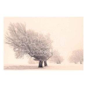 Baum in eisiger kälte sepia