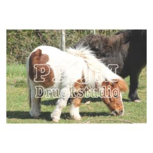 Pony auf der Wiese
