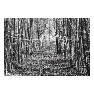 Gutes Holz ein Bild in Graustufen