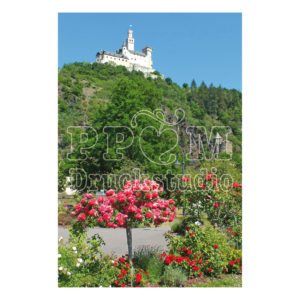 Rosengarten in Braubach