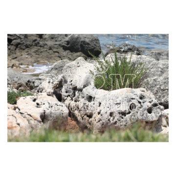 Steine am Meer mit Pfanzen